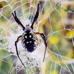 Mikroskoopilised juhtmed ämbliku võrguniidist