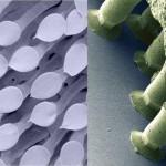 Kieli Ülikool: lehemardika jalgade nakkuvuse ja seenekübara ühisosa
