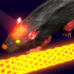 Fluorestseeruvad nanotorud – uus aken aju ehitusse